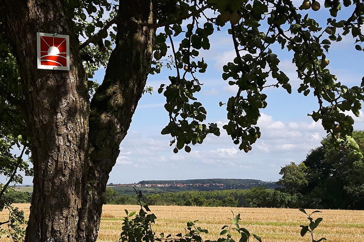 Wandern in der Pfalz - die besten Wanderwege in Rheinland Pfalz - Erholung und Wanderpfade