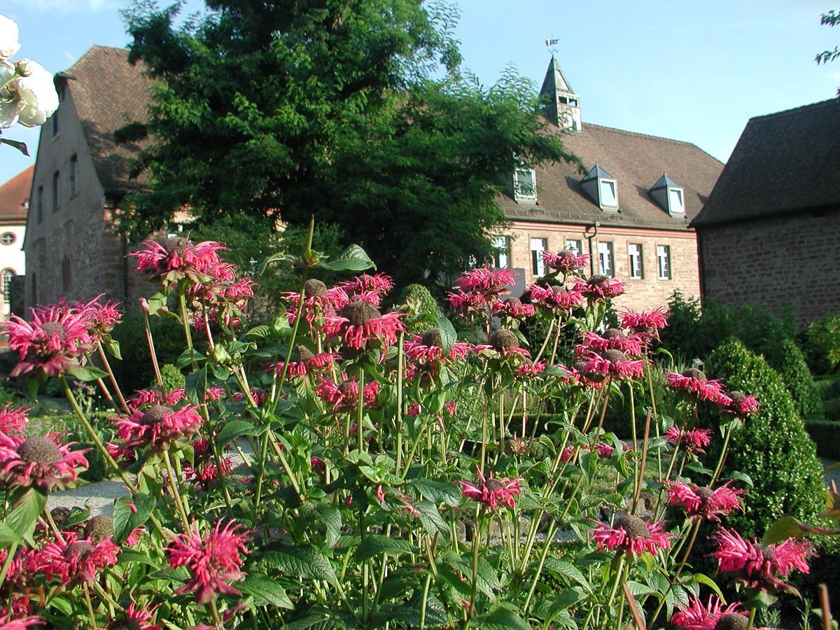Frühling im Kräutergarten des Hotel Kloster Hornbach in Rheinland-Pfalz